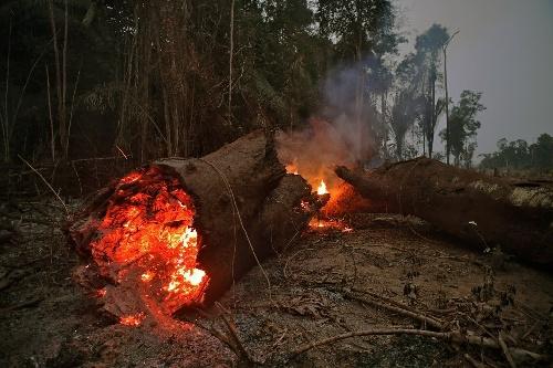 Imágenes que duelen de la Amazonia brasileña en llamas