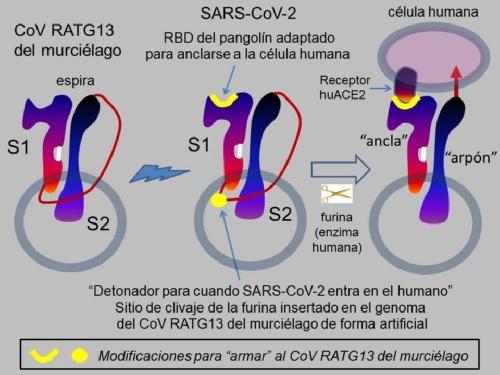 PANDEMIA DE LABORATORIO: Un investigador bahiense argumenta por qué el SARS-CoV-2 se creó en un laboratorio