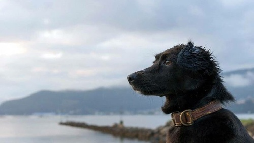 Amor incondicional: así espera el perro Comando a los tripulantes del submarino ARA San Juan