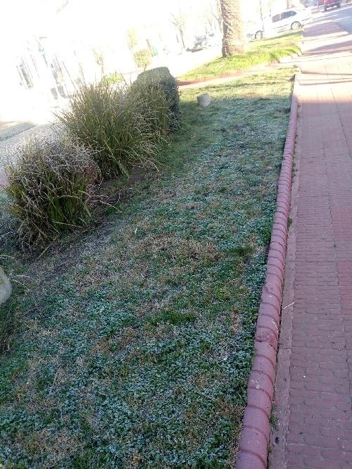 Fuerte helada en la ciudad y la región sudoeste bonaerense