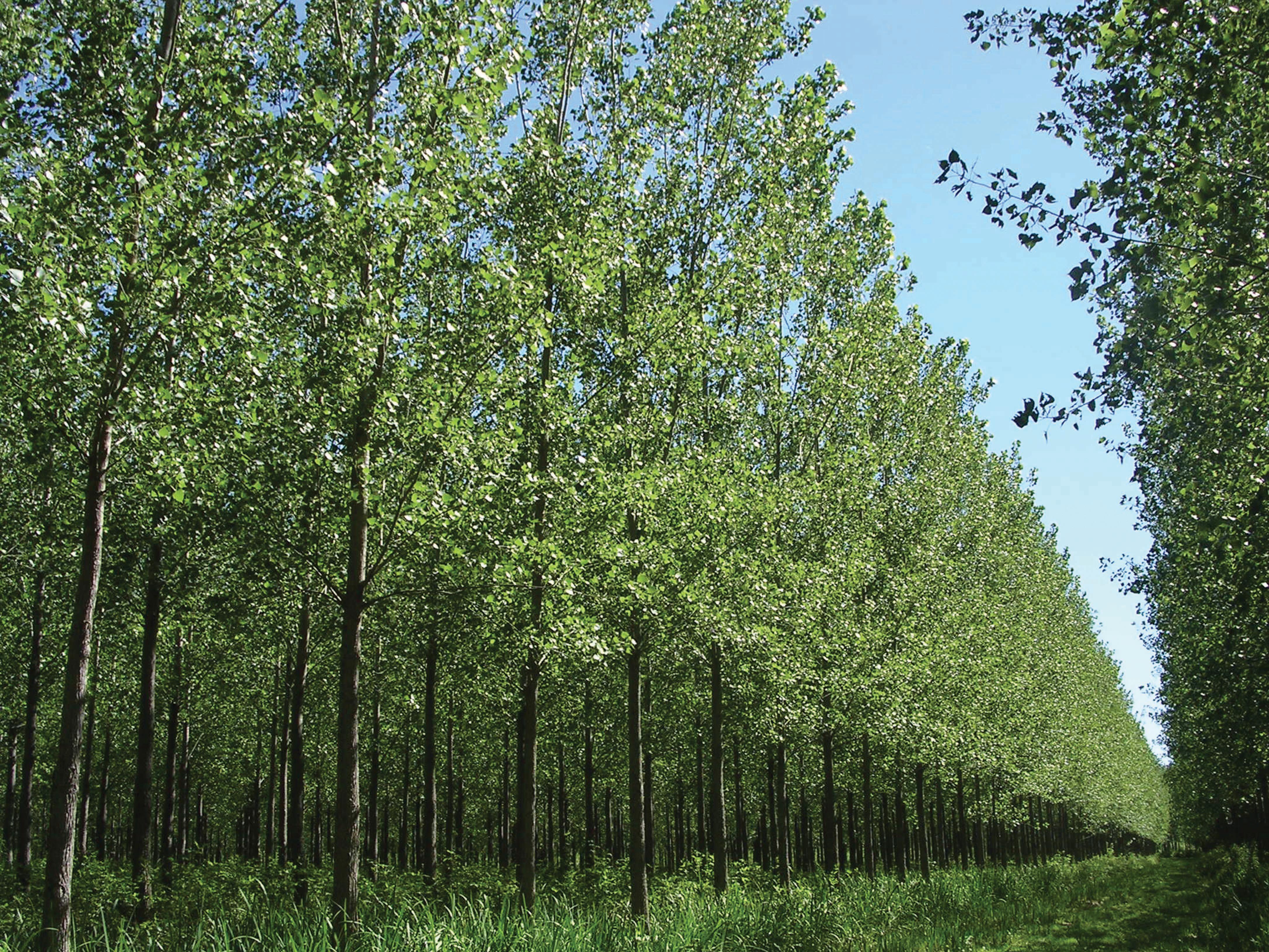 Productores forestales bonaerenses cobrarán planes demorados por 8 años