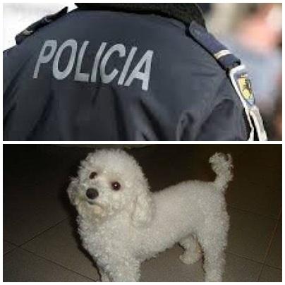 Allanaron una vivienda en Pigüé donde hallaron un perro hurtado en Puan