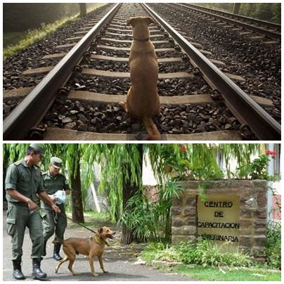 Ángel, el perro que esperó por seis años a su dueño en el andén